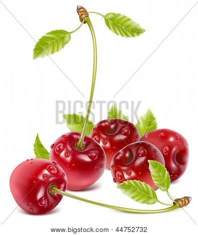 Vector illustration of ripe red cherries with leaves and water drops