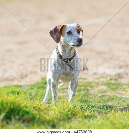 Portrait Of Homelessness Sad Dog