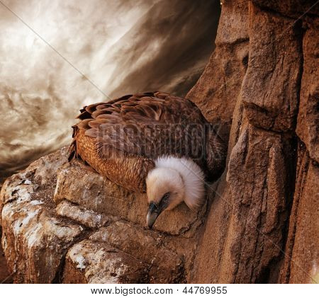 Eagle sitting on a rock against stormy sky poster