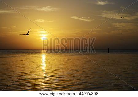 golden Sunset over the Gulf