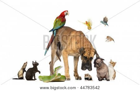 Group of pets together isolated on white