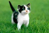 Cute Little Kitten Outdoors in Natural Light