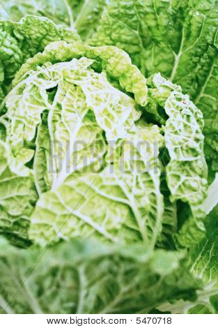 Your Cabbage
