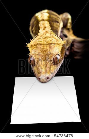Lizard With Blank Sign