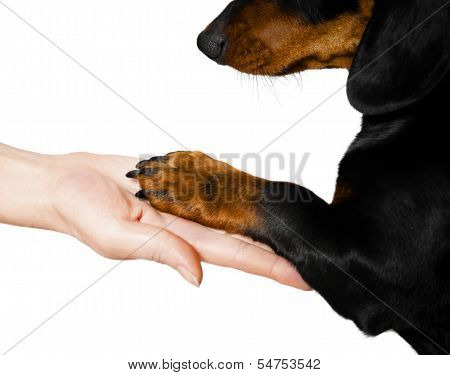 Friendship between man and animal isolated on white background poster