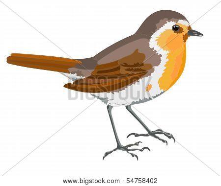 Robin Bird.eps