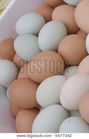Free Range Eggs At Farmers Market