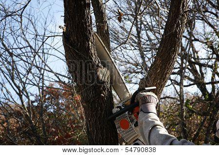 Trimming tree