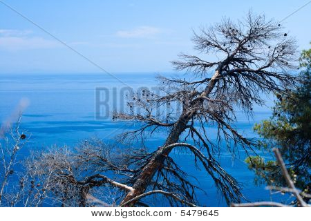 Burned-out Tree And Blue Aegean Sea.