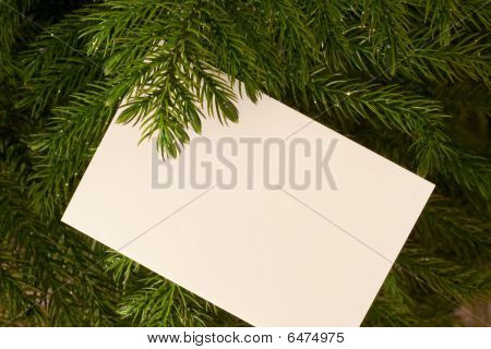 Evergreen And Card
