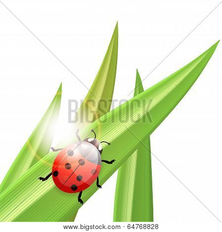 Ladybug An A Blade Of Grass, Illustration
