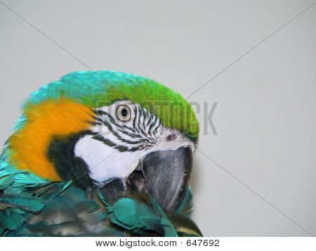 Macaw Grooming