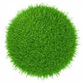 a piece of green lawn. isolated on white background. realistic grass poster