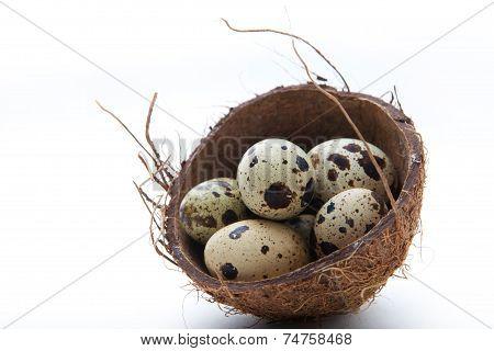 Quail eggs in coconut nest on white background