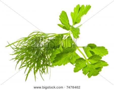 Dill And Parsley Branches
