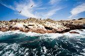 Ballestas Islands, Paracas National Reserve, Paracas, Ica Region, Peru poster