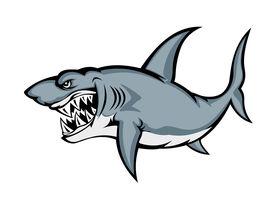 Big grey shark
