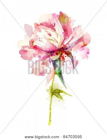 The single flowering  pink peony