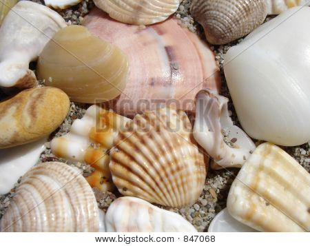SeaShells Sleep