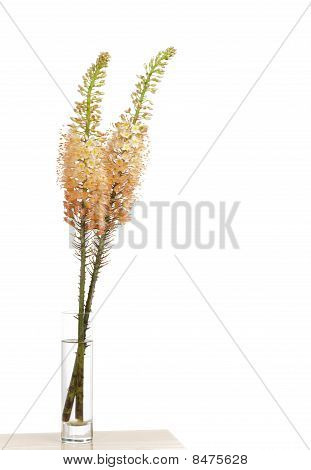 Steppe Candle
