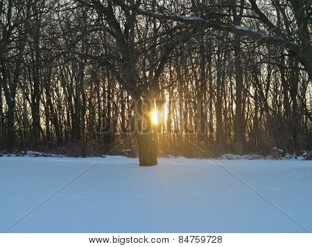 Bright winter sunset with multi beams of light at Bode Lake Forest Preserve