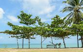 Seascape with tropical almond tree on beach poster