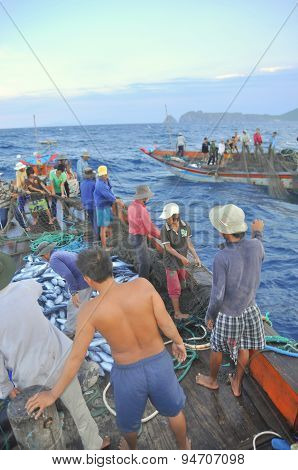 Nha Trang Vietnam - May 5 2012: Fishermen are collecting tuna fish caught by trawl nets in the sea o
