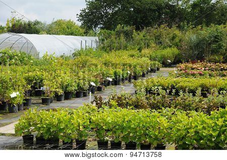 A Plant Nursery In Brittany
