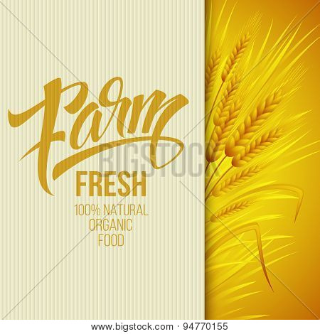 Wheat ears icon. Ears of Wheat. . Vector illustration