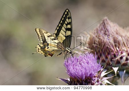 Close up butterfly.