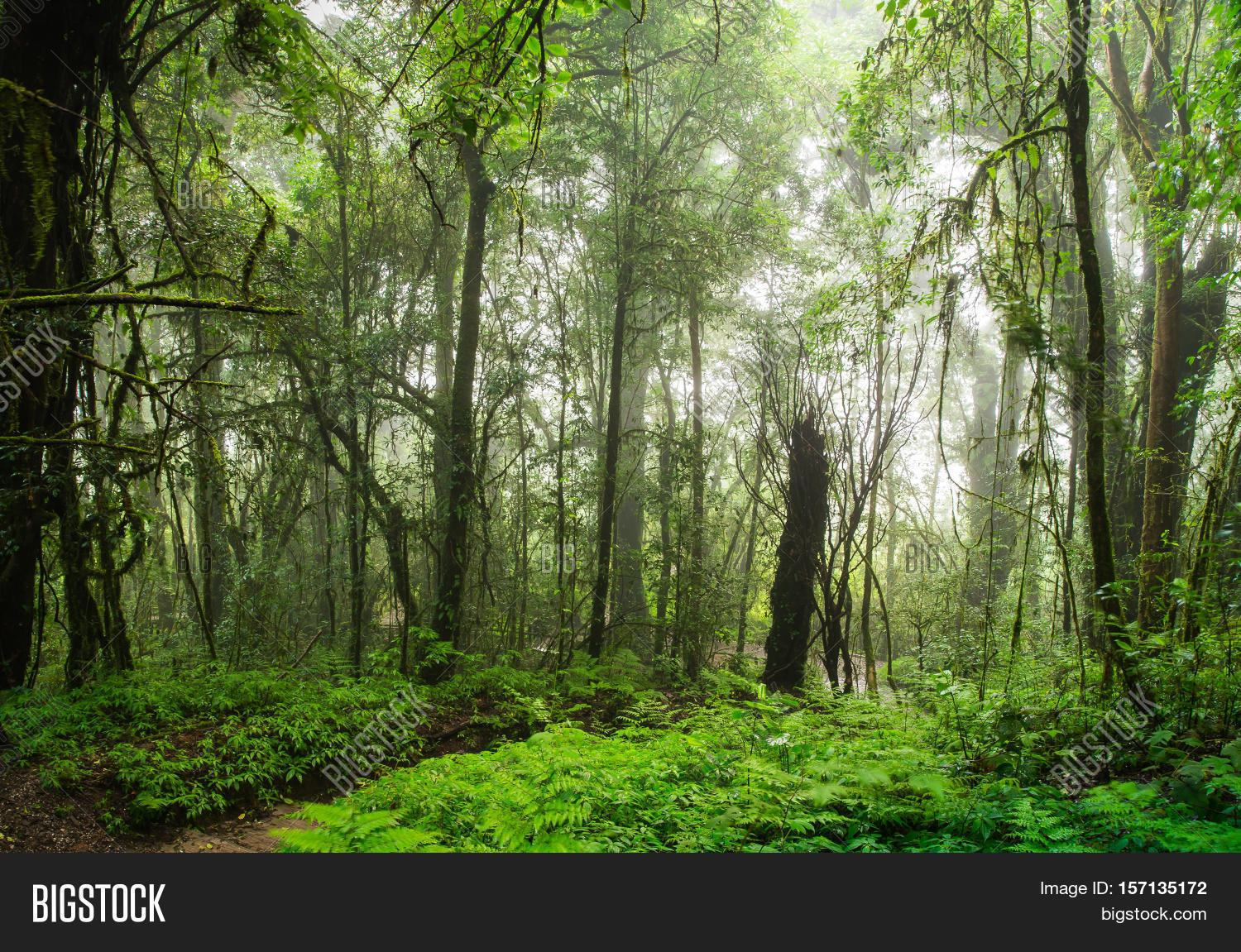 rainforest mist foggy image photo free trial bigstock