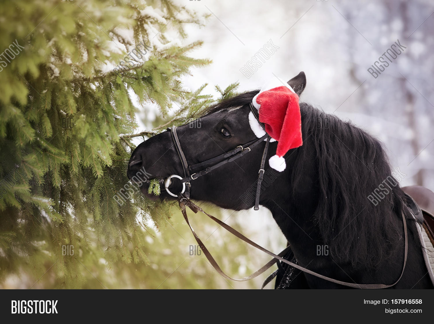 Black horse in a red Santa Claus hat eats fir-tree branches 99f993612910