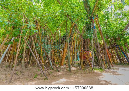 Crutches Under Bodhi Trees In Temple.