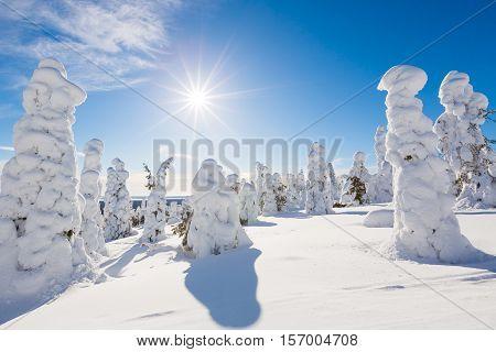 Frozen heavy snow on trees in beautiful landscape in Lapland