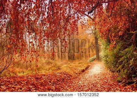 Park In Kromlau, Saxony, Germany. Amazing, Colorful Autumn Background