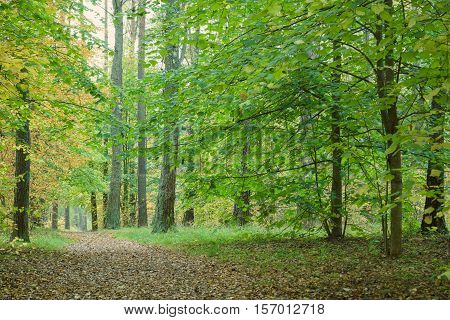 Pathway through beautiful autumn forest. Autumn forest covert.