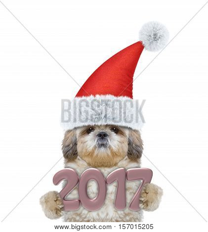 Cute santa dog with 2017 new year numbers -- isolated on white