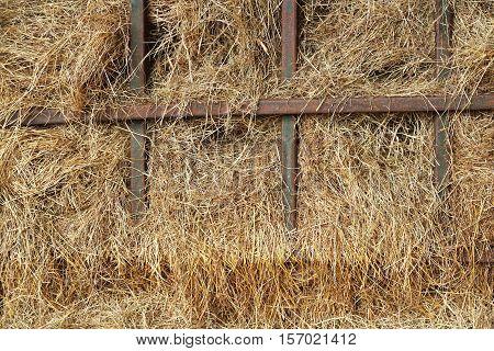 dry yellow hay in farm. dry grass