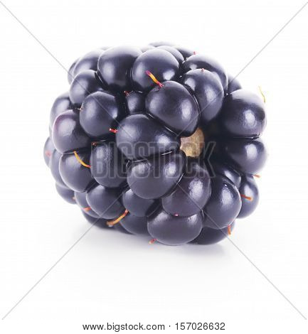 Single fresh black berry isolated on white background