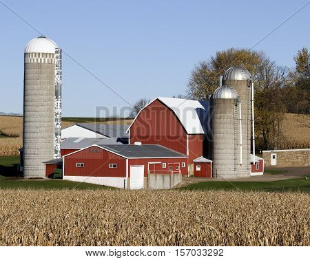 Wisconsin dairy farm surrounded by corn fields