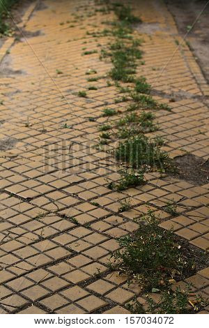 Nobody walks here - an abandoned road paved with yellow bricks
