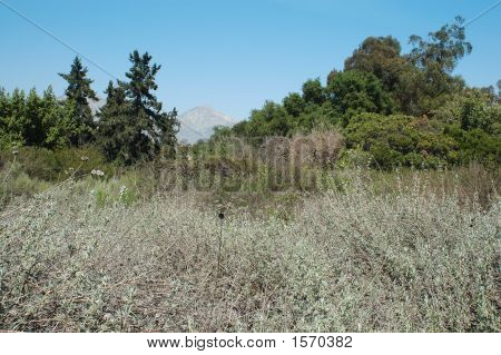 a California field dry grass western