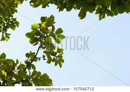 Green Leave On Tree With Sky Background