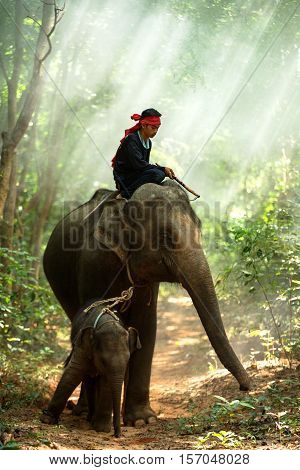 Elephant Mother and son with mahouts man