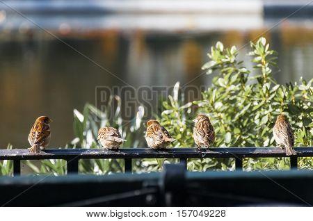 Birds cathing sun Central Park in New York