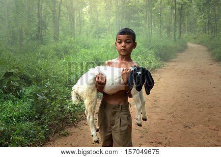 Child goat in the wilde of village