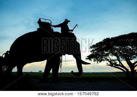 Silhouette elephant with mahout at Surin Province Thailand of asian
