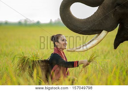 Young farmers are feeding the a  elephants.