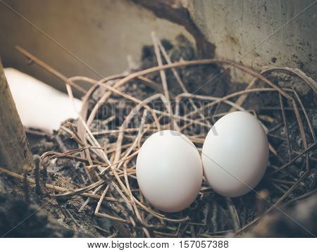 Bird's eggs in the straw nest. Selective focus and color filter image with place your text