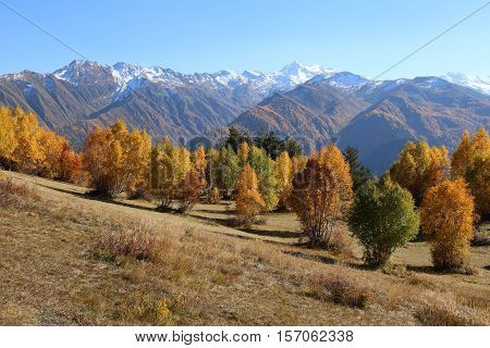Mountains and a forest on a slope with bright autumn colors, Caucasus mountains, Svaneti, Georgia, Europe